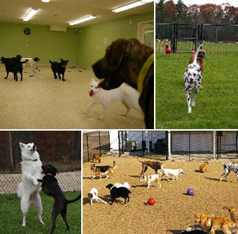 Groups of Dogs Playing
